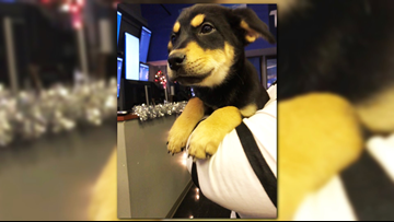 Really sweet, 11-week-old Reda needs to find her fur-ever home