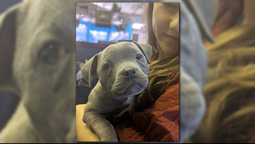 Lois the pit bull is first-ever as Pet of the Week