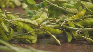 Arkansas Plant Board meets, establishes new Dicamba restriction periods