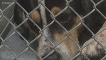 Ordinance not allowing pit bulls to be adopted in Hot Springs causes public outcry
