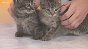 Pet of the Week: The Addam's Family