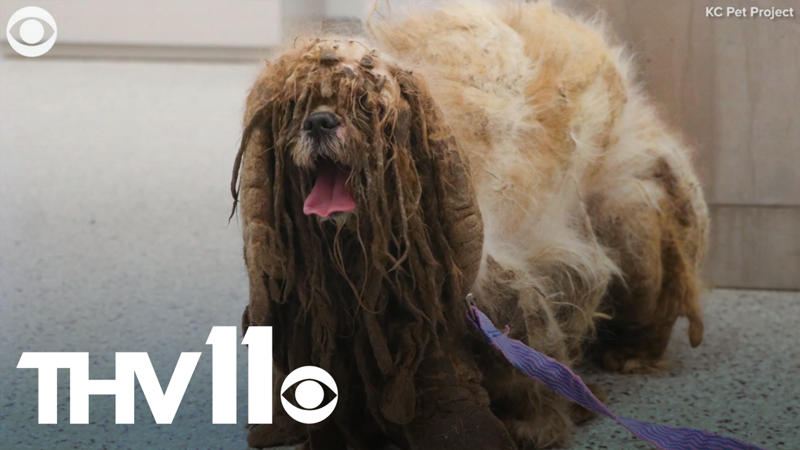 Dog has new lease on life after 7 pounds of fur shaved off