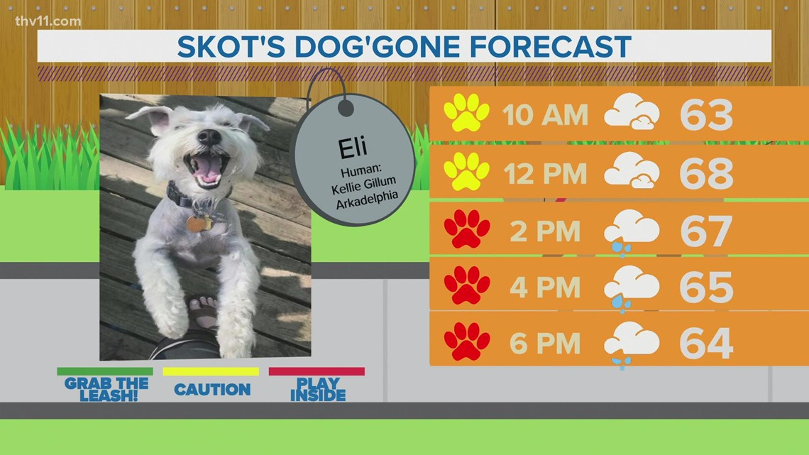 Eli | Skot's dog'gone forecast