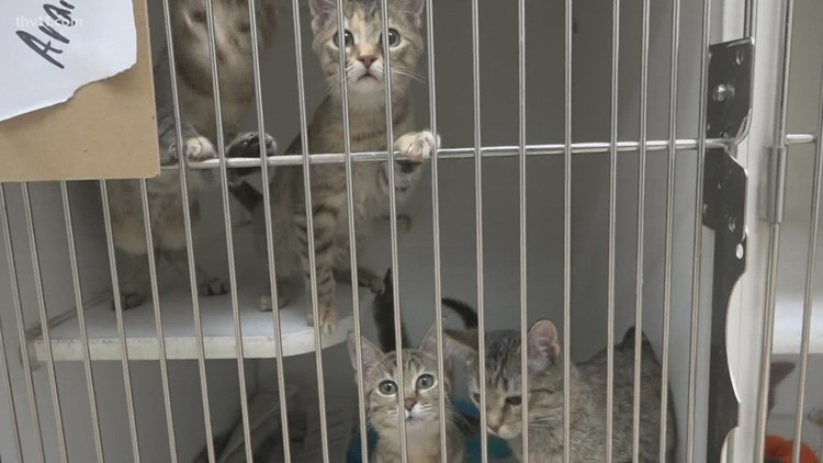 Central Arkansas organization calling for more pet fosters to prevent euthanizations