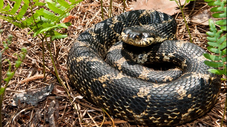 Snakes Alive Your Go To Guide For Understanding Snakes In