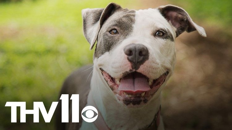 North Little Rock group seeking to appeal city ban on pit bulls