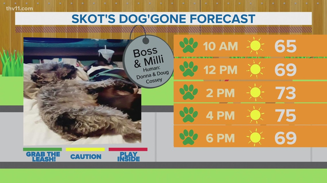 Boss & Milli | Skot's dog'gone weather forecast