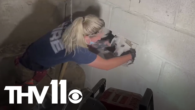 Dog rescued from behind a wall