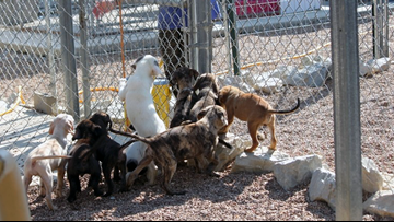 Wynne animal shelter forced to close due to lack of funds turns to public for help