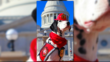 Molly the Fire Safety Dog is the official ambassador for documentary 'Superpower Dogs'