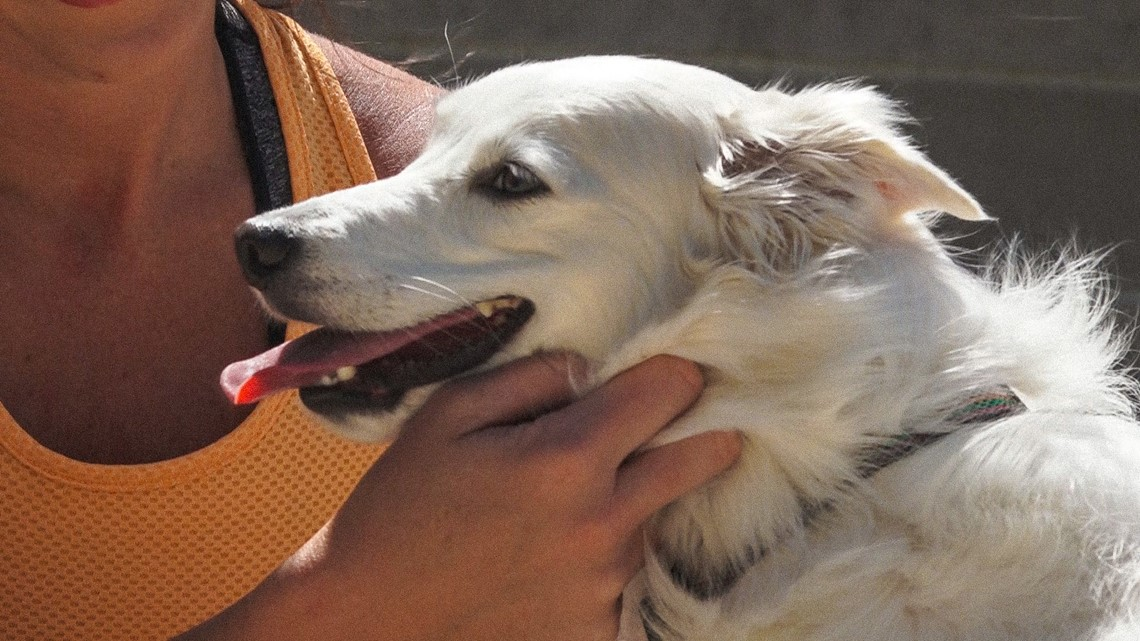 Now that it's summer in Arkansas, hot pavement could be harming your dog