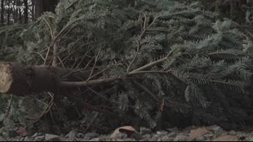 Turn your Christmas tree into a fish habitat