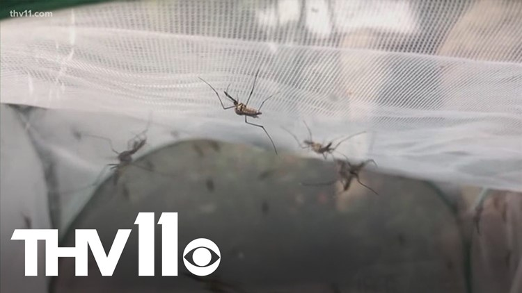 Arkansas mosquitos may have braved winter storm, expert says
