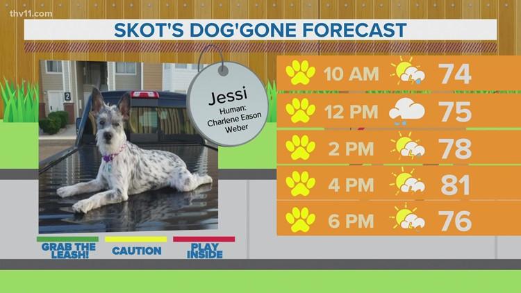 Jessi | Skot's dog'gone forecast