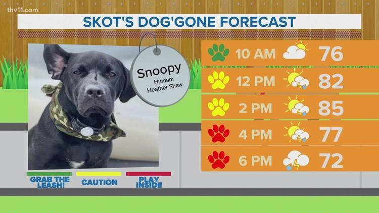 Snoopy | Skot's dog'gone forecast