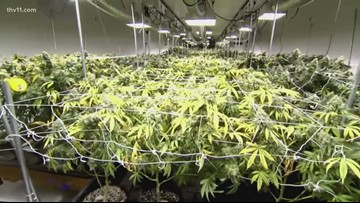 Approved medical marijuana companies choose location to license