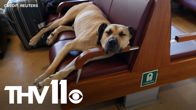 Meet Boji, Istanbul's commuter dog