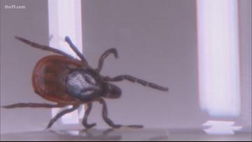 Tick-bourne diseases becoming an increasing danger in Arkansas, officials warn