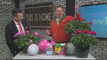Tips & tricks for growing Geraniums with Chris H. Olsen