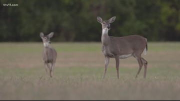 AGFC keeping close eye on Chronic Wasting Disease as it spreads across the U.S.