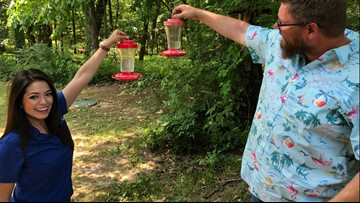 Hummingbird haven surrounded by 1,800 acres in Arkansas