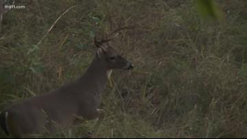Independence deer tests positive for CWD