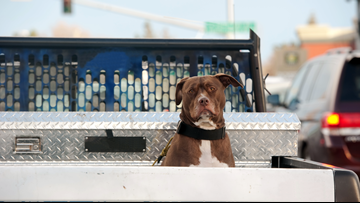 Is it illegal to put your dog in the bed of a truck? | 11 Listens
