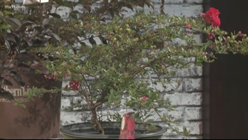 Crape Myrtles for your home with Chris H. Olsen!