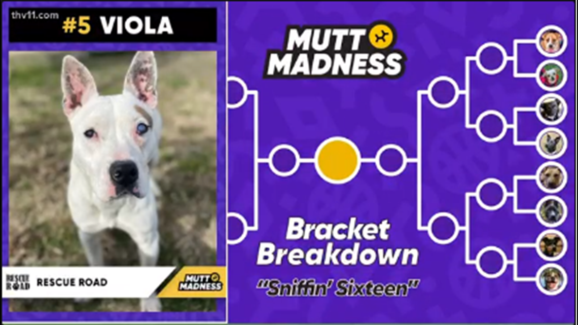 Vote Viola and help Rescue Road win Mutt Madness competition
