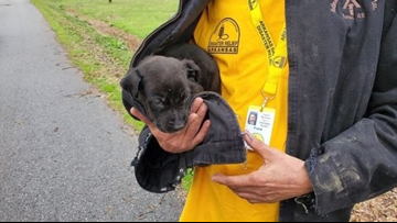 Two elderly Arkansas women saved from burning home, puppy revived with mouth-to-mouth