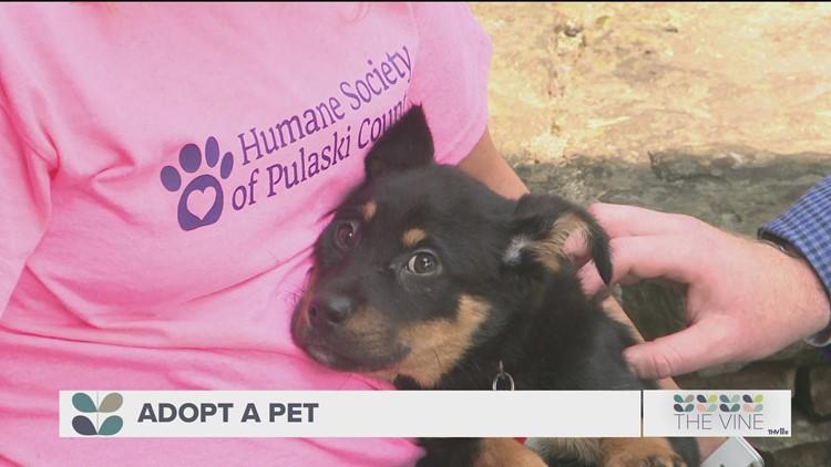 Adopt-a-pet: Meet Klaus!