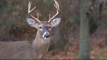 Deer with chronic wasting disease found in Independence County