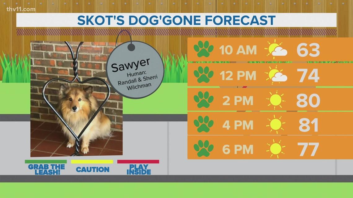 Sawyer | Skot's dog'gone forecast