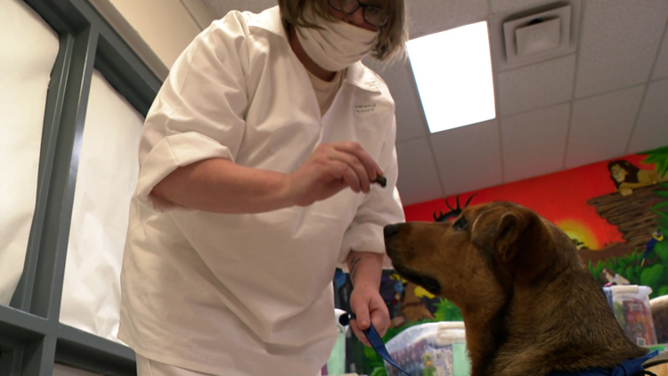 Arkansas inmates find purpose with dog companions: 'A reminder I'm capable of loving again'