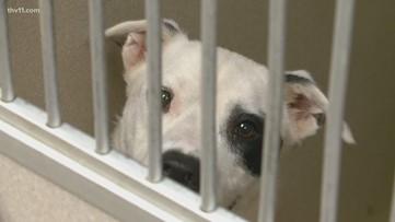 Digital pet adoptions proving to be a success