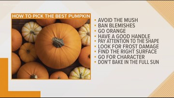 Here's how to pick the perfect pumpkin!