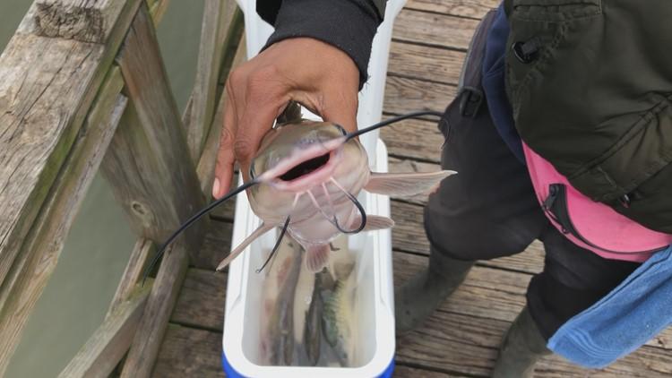 Pine Bluff Catfish Fishing Saracen Landing Lake