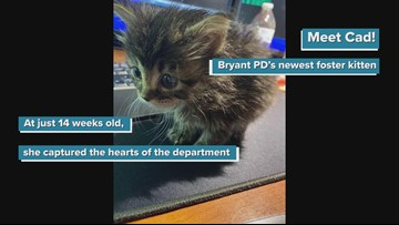 Introducing Cad, Bryant Police Department's foster kitten