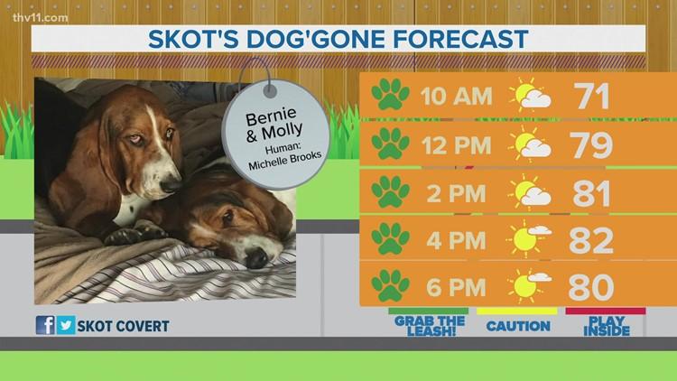 Bernie & Molly | Skot's dog'gone forecast