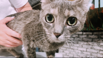 Abbey, the little cutie kitty, is the purrr-fect amount of friendly