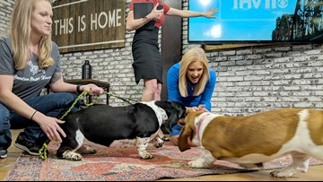 Amanda Jaeger's life is made by surprise birthday Basset visit