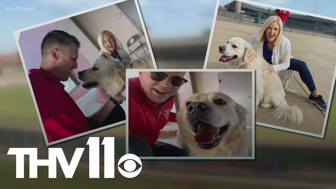 Meet 'Dizzy,' the Arkansas Travelers ballpark dog