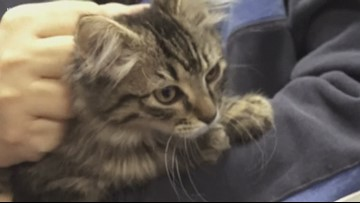 'You know what, we'll take her': Bryant police foster kitten named Cad