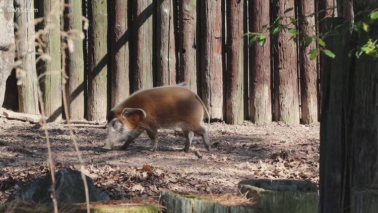 How the penny sales tax increase could transform the Little Rock Zoo