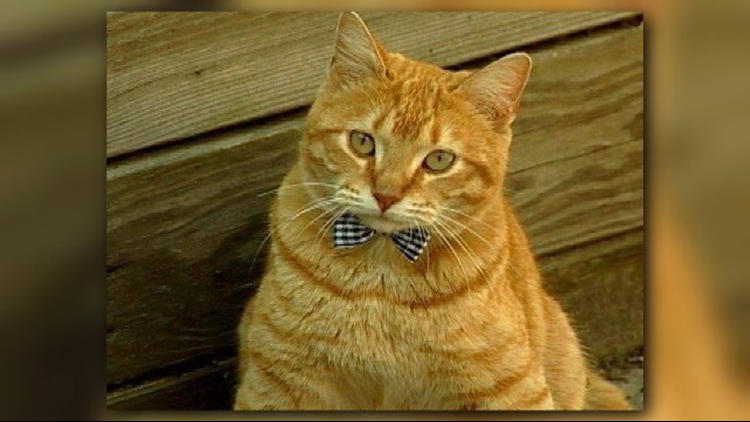 Larry the Garden Cat [2004-2007] KTHV