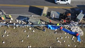 Truck full of live chickens overturns on Arkansas highway