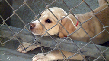 The overpopulation of stray dogs in rural Arkansas towns   11 Listens
