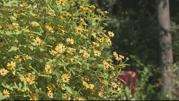 It may still feel like summer, but colors are thriving at Garvan Gardens