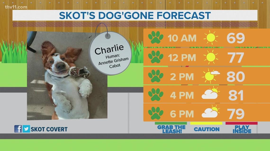 Charlie | Skot's dog'gone forecast