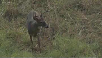 Testing for chronic wasting disease in deer with Trey Reid
